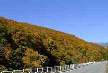 秋の楠川紅葉