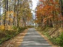 紅葉の地蔵通り