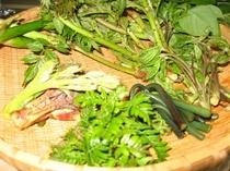 蕨、ぜんまい、たらの目,うど等の山菜