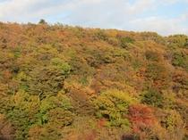 当館前山の紅葉