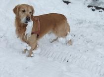 はしゃぐタツキと足に付く雪塊