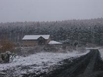 2009年11月2日の雪