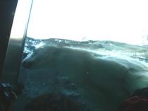 水中のホッキョクグマ