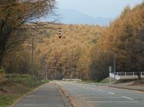 北星山(カラマツ紅葉)