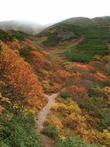 富良野岳の紅葉