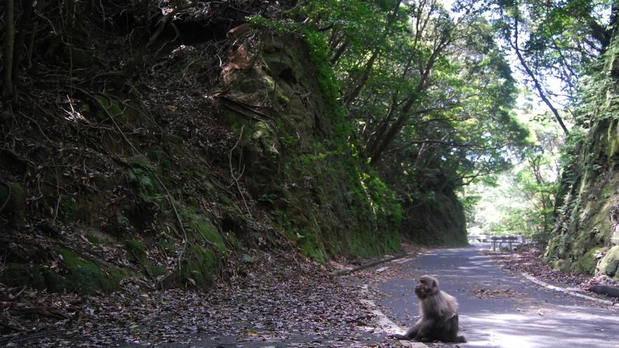 *【西部林道】車で51分の世界自然遺産エリア。ヤクシカや猿など沢山の生き物が生活しています。