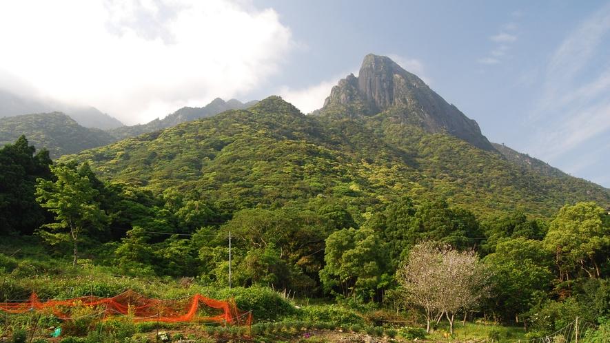 *【モッチョム岳】車で約7分頂上からの絶景は最高。屋久杉「モッチョム太郎」も待ってます!