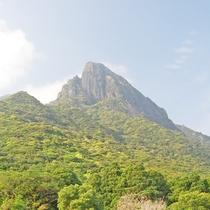 【モッチョム岳】車で約7分頂上からの絶景は最高。屋久杉「モッチョム太郎」も待ってます!