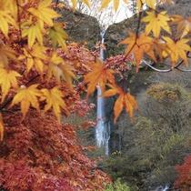 紅葉の舟尾滝