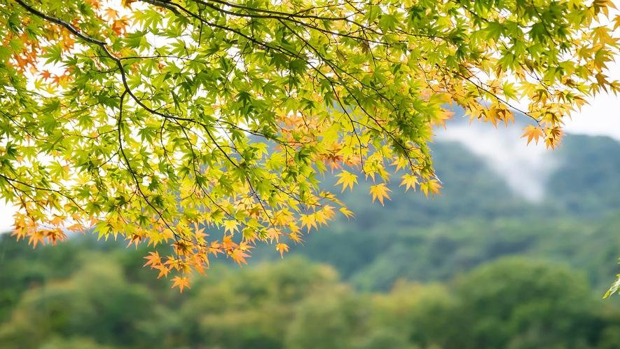 榛名山から心地よい秋風が吹く、伊香保で静かな秋のひとときを。