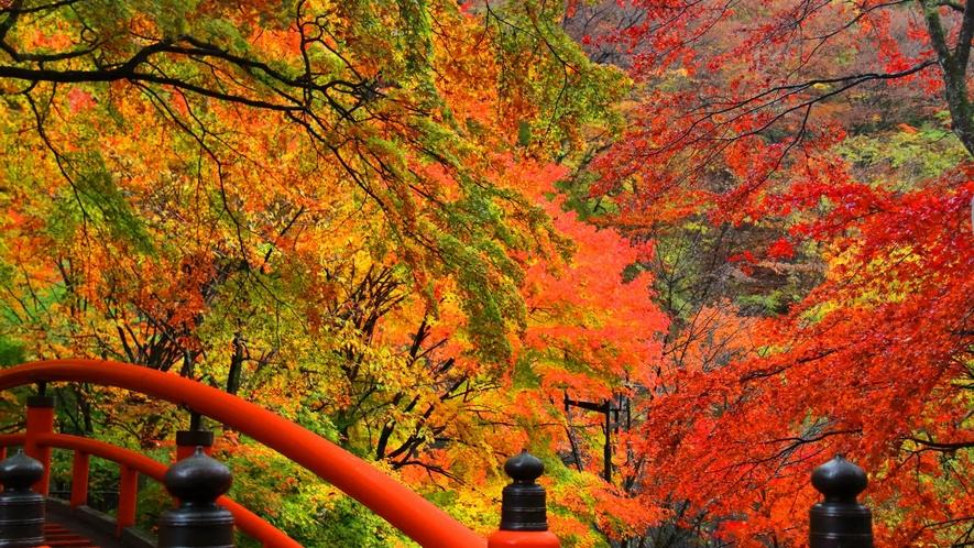 美しい紅葉は11月が見ごろ。大人気シーズンのため早めのご予約を!