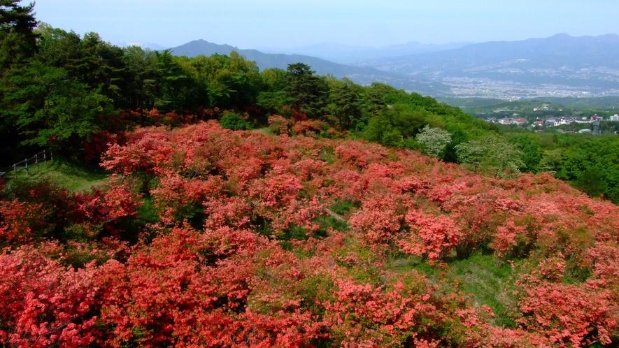 伊香保温泉を望む長峰公園では満開のつつじをお楽しみいただけます。