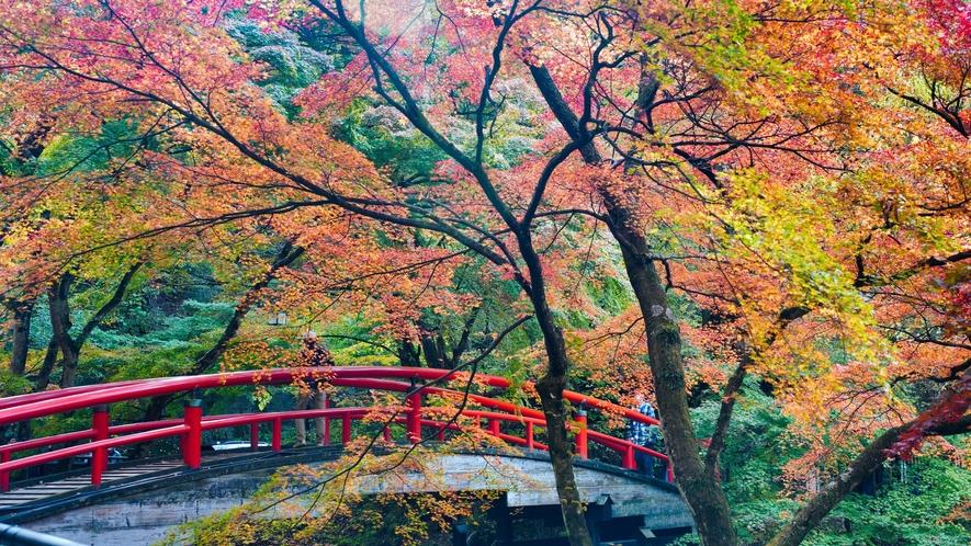 初秋から晩秋にかけて、移り変わる季節を堪能してください。