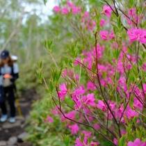 長峰公園や伊香保森林公園で、自然と触れ合うハイキングも