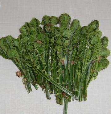 山菜(コゴミ)