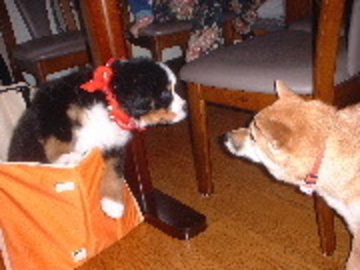 【当館一番人気!】ペットと一緒に宿泊プラン【1泊2食付】