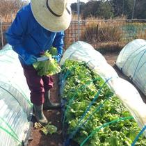 こちらが地元野菜の生産者さんです♪
