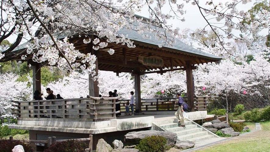 菊池公園 ソメイヨシノやヤマザクラなど約3000本の桜が山いっぱいに広がります。