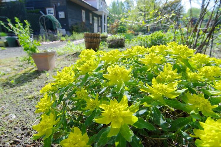 手作りの庭では季節の草花が眼を楽しませてくれます