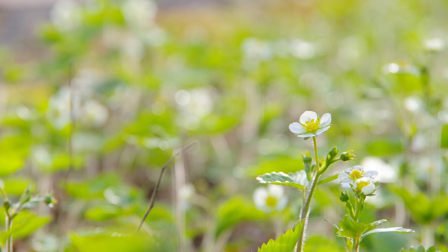 新緑の頃、庭のあちこちに小さな花が咲いています。