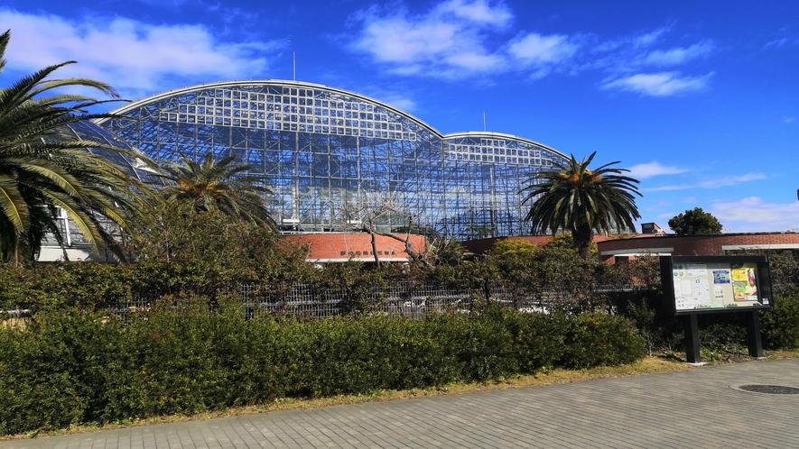'夢の島熱帯植物館②