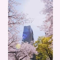 ◆春/帝国ホテル大阪は日本有数の桜の名所に建つホテルです。