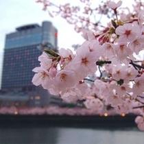 ◆春/日本有数の桜の名所に建つ帝国ホテル大阪