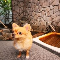 【わんちゃんと入れる専用貸切風呂♪】