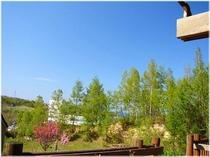 春・初夏 デッキからの新緑