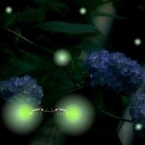 ■6月は敷地内でホタルが見られます。