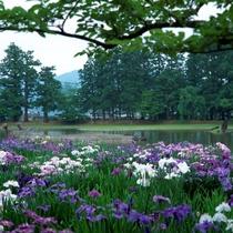 ■世界文化遺産 平泉 初夏
