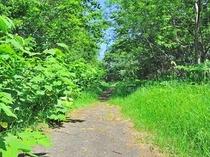 【ハイキングコース】緑のトンネルを進みます