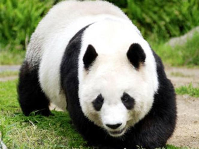 王子動物園:ジャイアントパンダ・コアラなど144種の動物たちが飼育展示されています♪