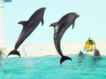 【須磨海浜水族園】イルカライブや、チューブ型水中トンネルがあるアマゾン館が人気♪