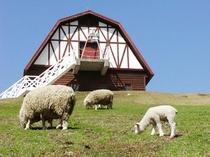 【六甲山牧場】家族でのんびり! お弁当もってピクニックを楽しんだり、羊たちと戯れて遊べます☆