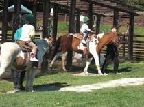 乗馬(引き馬)体験
