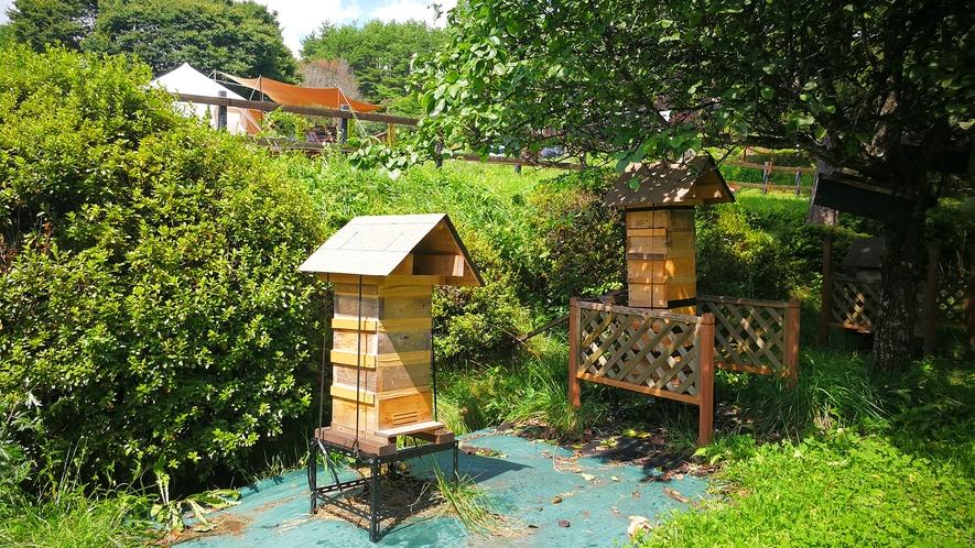 *養蜂スペース/オーベルジュ裏では「日本ミツバチ」の養蜂を行っています。