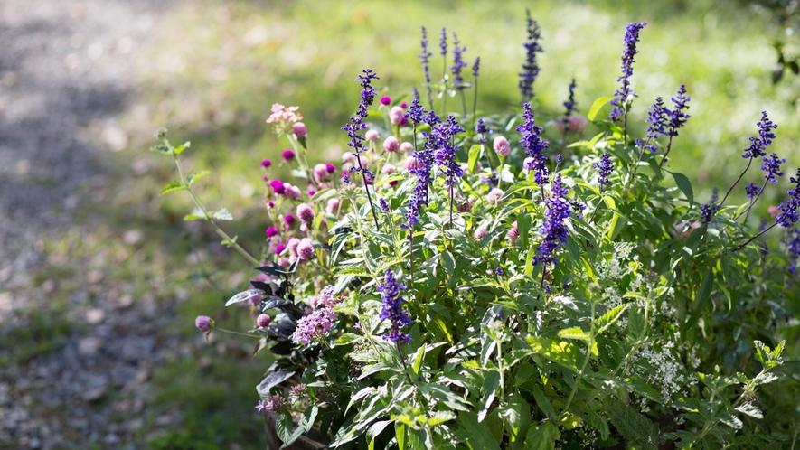 *花/広大な敷地内には様々な植物が。お気に入りを探してみよう!
