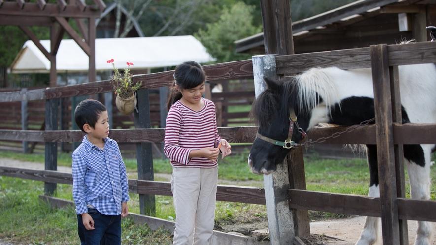 *牧場/お子様と一緒にポニーとのふれあいませんか?
