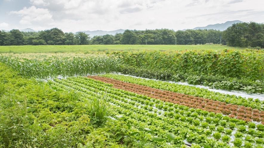 *自家農園/自家栽培の無農薬野菜を育ててます。
