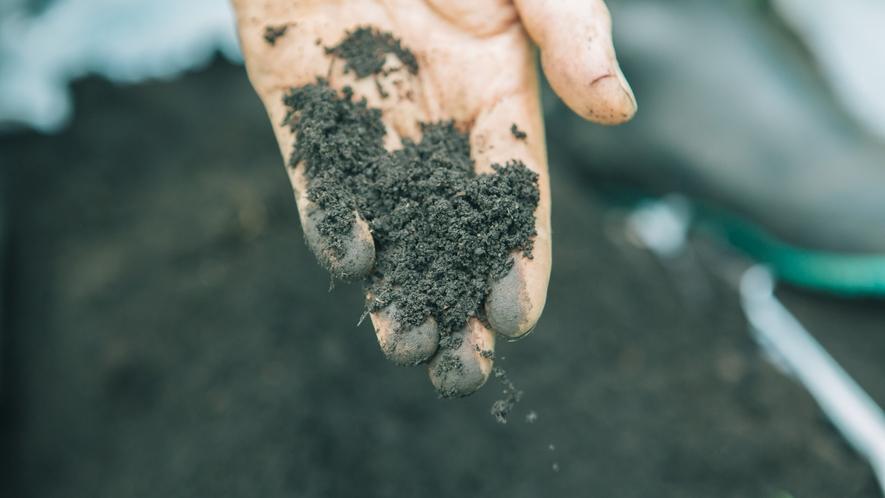 *自家農園/農薬は一切使わず、肥料はポニー牧場の馬のたい肥を利用。
