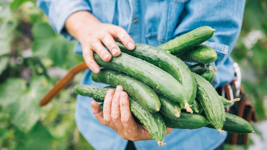*自家農園野菜/八ヶ岳・清里で育った新鮮な野菜をお召し上がりください。
