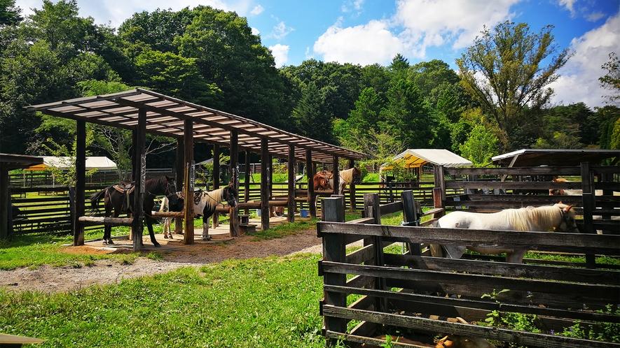 *ポニー牧場/乗馬体験と動物たちの世話ができます。
