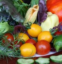 新鮮地野菜
