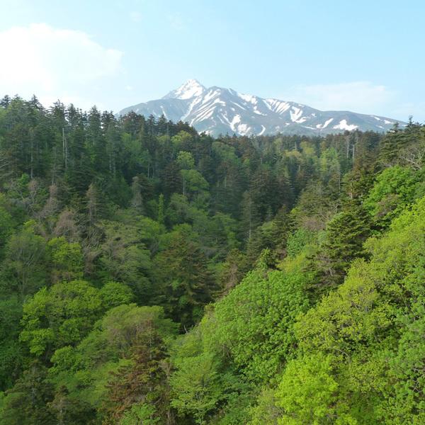 姫沼から見える利尻山