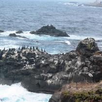人面岩付近海鳥