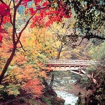 秋のこおろぎ橋