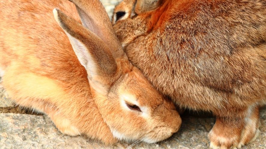 月うさぎの里 ウサギと直接触れ合えます!お車で25分