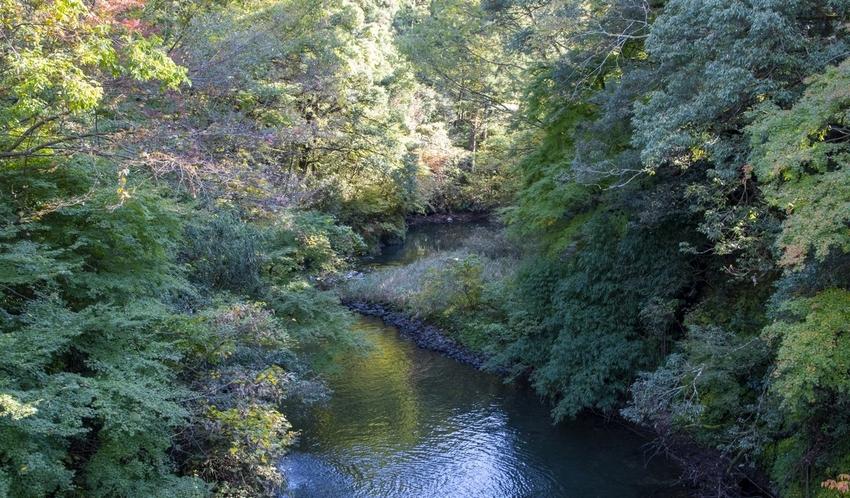 むせかえるほどの緑に囲まれている山中温泉