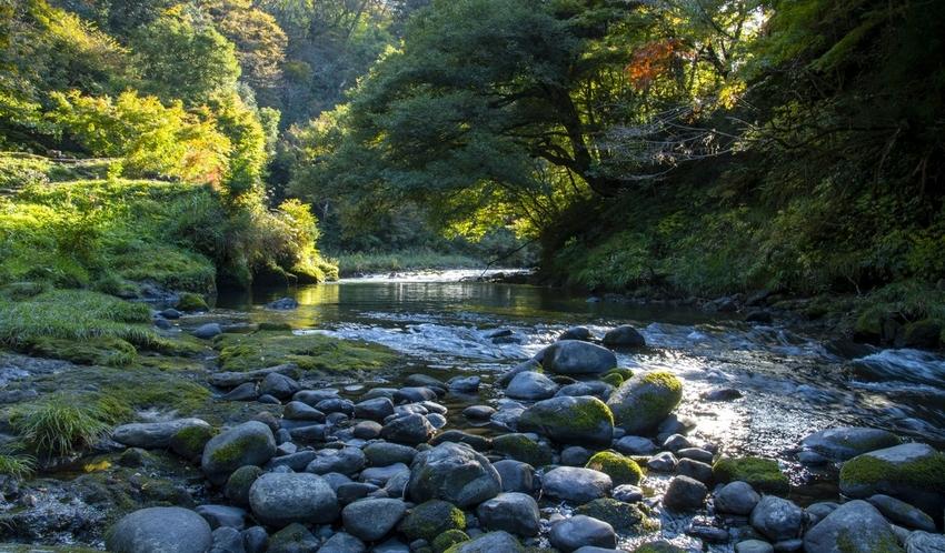 鶴仙渓の川床からの景色も美しく、おススメです。